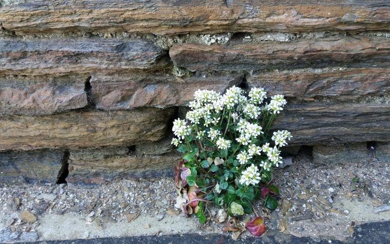 Wall flower - flat stone wall