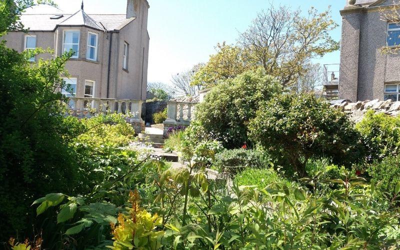 Gardens in Stromness